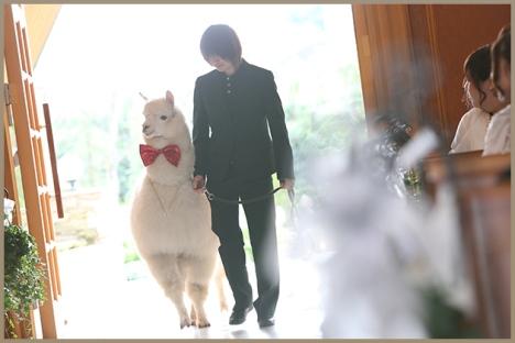 photo_alpaca_plan01